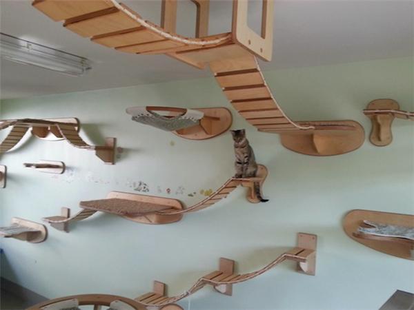 猫咪的happy游乐场