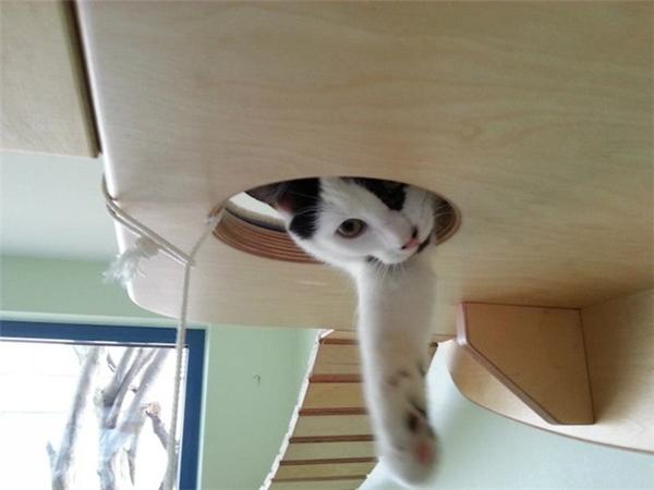 猫咪的happy游乐场(六)
