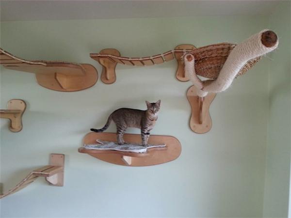 猫咪的happy游乐场(七)