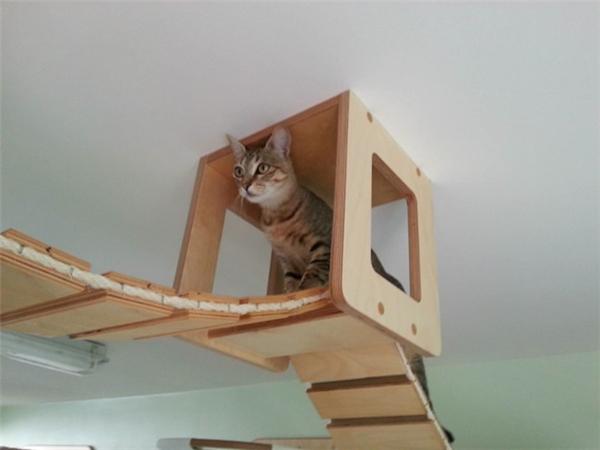 猫咪的happy游乐场(八)