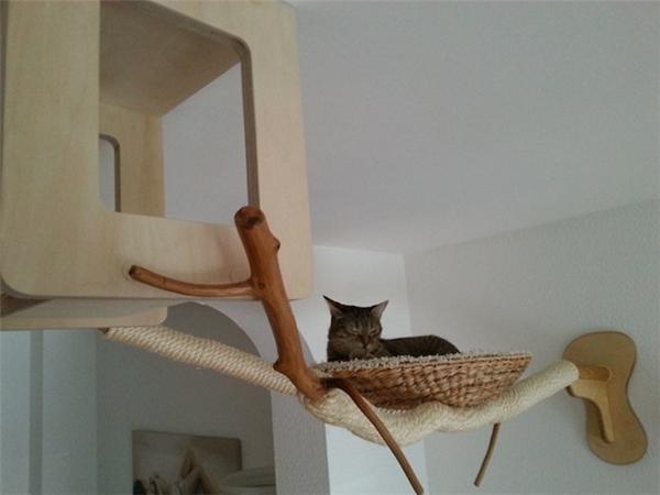 猫咪独立房间设计图片
