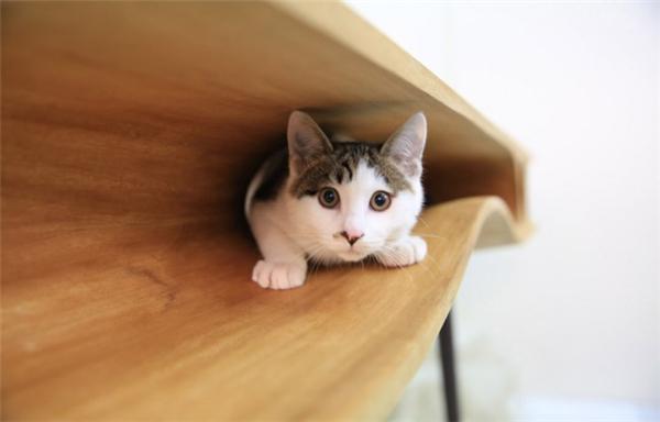 萌到你的猫桌