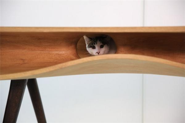萌到你的猫桌(二)