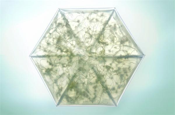 室内折叠微型花园(三)
