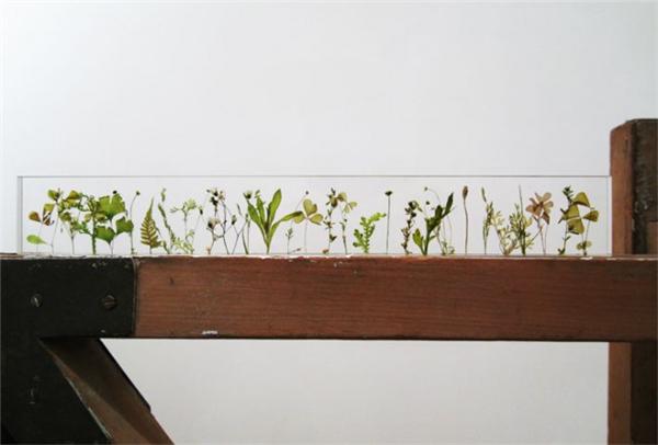 充满诗意的花园尺(六)