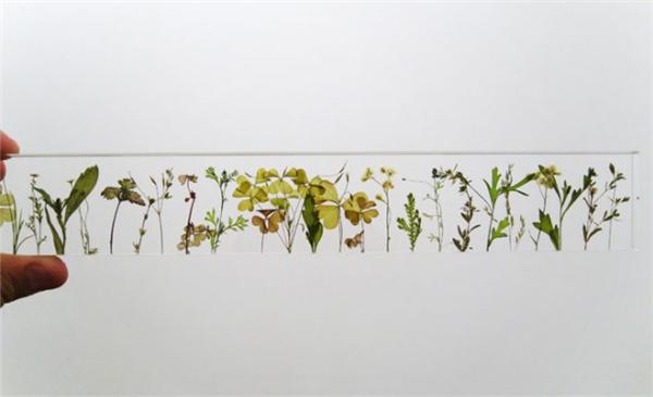 充满诗意的花园尺(七)