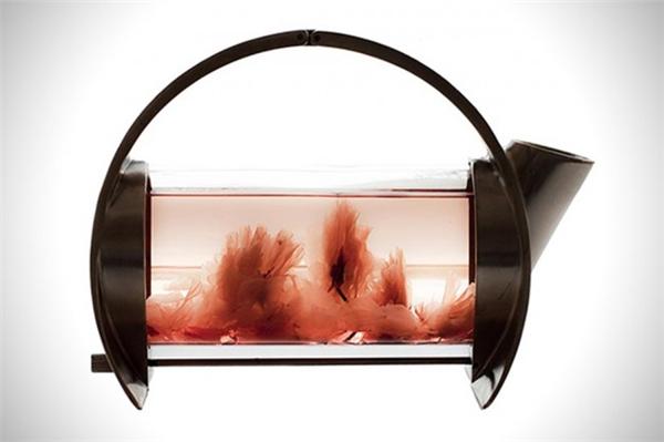 简约的不锈钢透明茶壶(八)