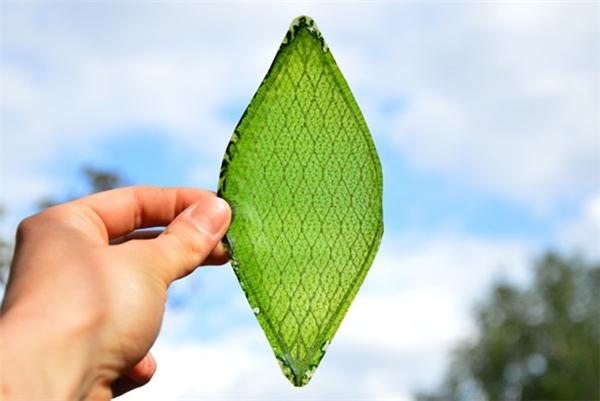 首个人造绿叶诞生了