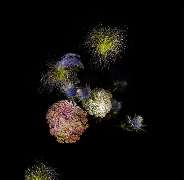 美腻的花瓣烟花(二)