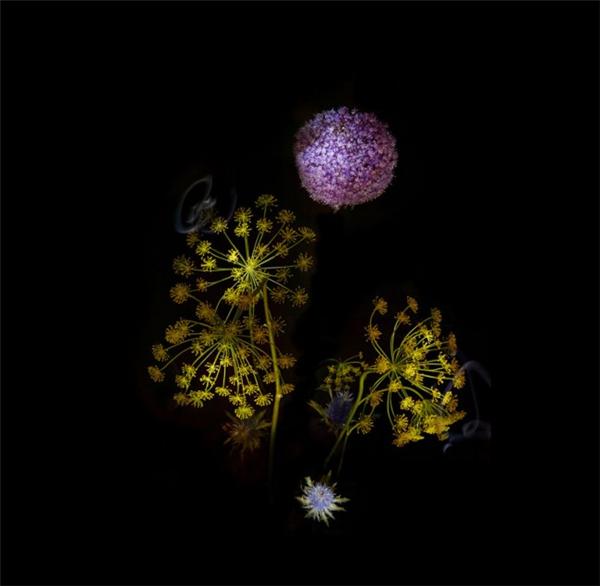 美腻的花瓣烟花(三)