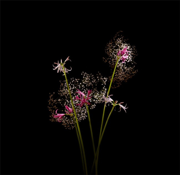 美腻的花瓣烟花(五)