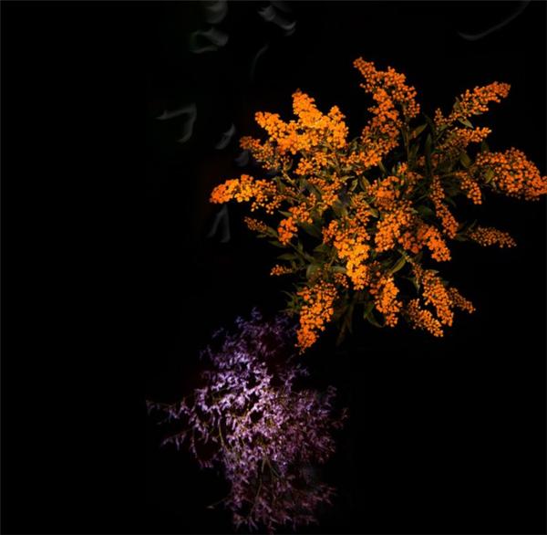 美腻的花瓣烟花(六)