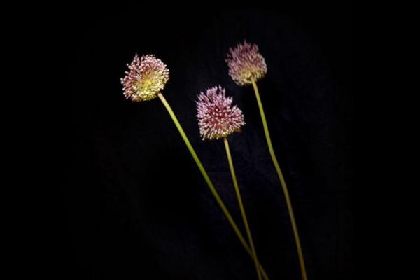 美腻的花瓣烟花(九)