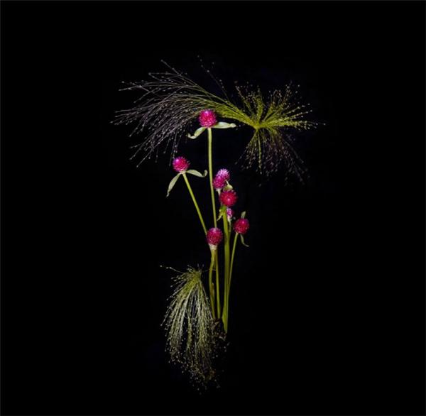 美腻的花瓣烟花(十)