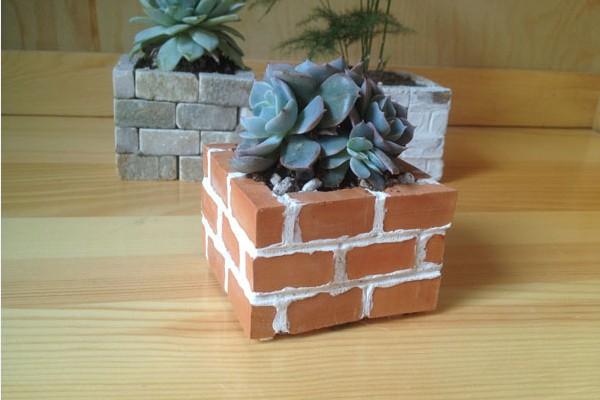 砖墙多肉植物