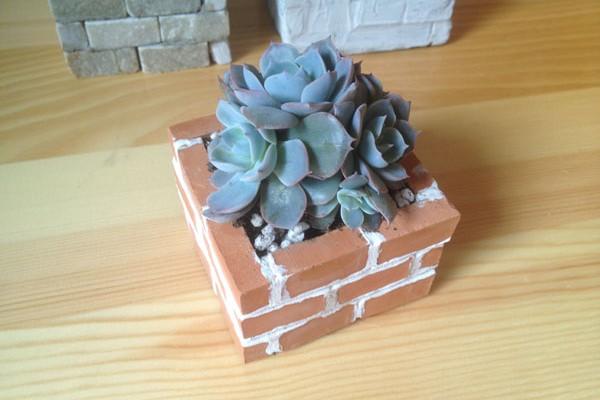 砖墙多肉植物(二)