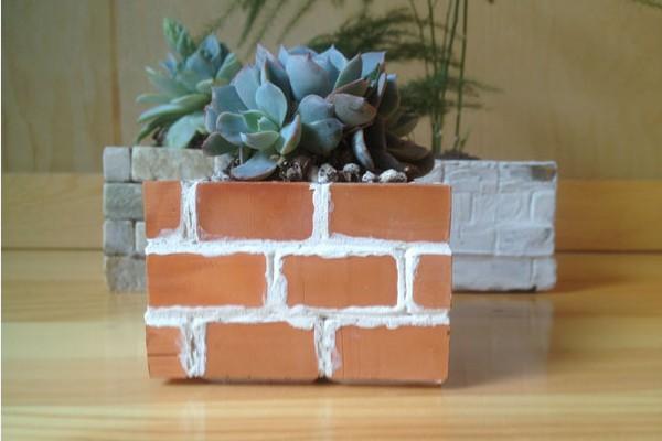 砖墙多肉植物(三)