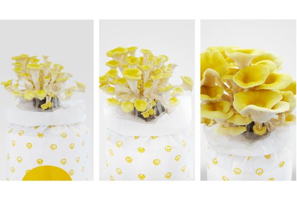 盆栽蘑菇(四)