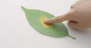 Leaf Thermometer 树叶变色温度计