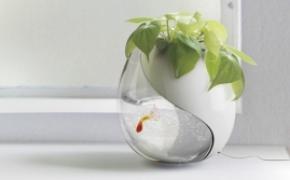 生长在花盆里的鱼缸