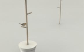 为鸟儿们设计的贴心落脚点