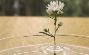 赋予诗意的涟漪花瓶
