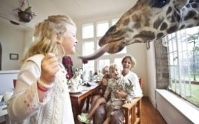 长颈鹿庄园 与长颈鹿亲密接触