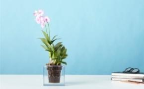 透明漂亮的花盆设计