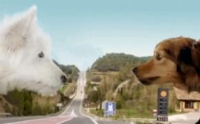 创意汽车广告 狗狗的爱恋