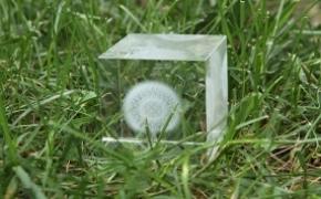 蒲公英水晶立方体